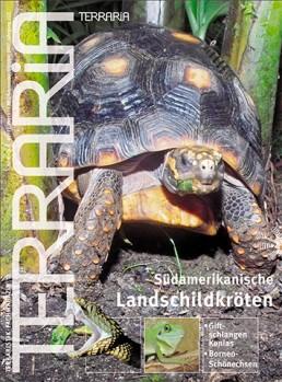 7 Südamerikanische Landschildkröten