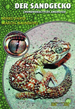 Der Sandgecko: Chondrodactylus angulifer