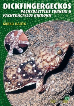 Dickfingergeckos, Pachydactylus bibroni, P. turneri