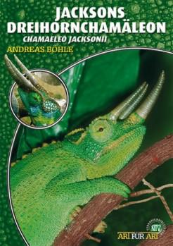 Das Dreihornchamäleon: Chamaeleo jacksonii