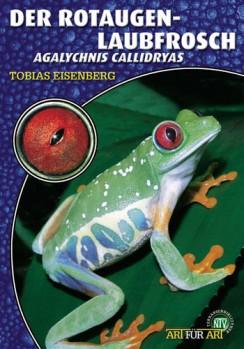 Der Rotaugenlaubfrosch Agalychnis callidryas