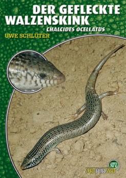 Der Gefleckte Walzenskink: Chalcides ocellatus