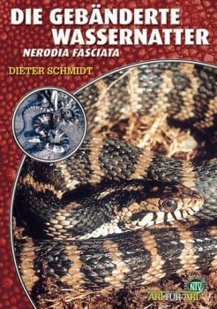 Gebänderte Wassernatter Nerodia fasciata
