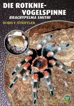 Die Rotknie Vogelspinne, Brachypelma smithi