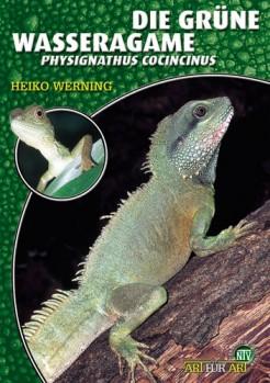 Die Grüne Wasseragame Physignathus cocincinus
