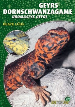 Die Geyrs Dornschwanzagame, Uromastyx geyri