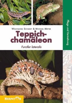 Teppichchamäleons Furcifer lateralis