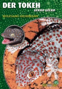 Der Tokeh Gekko gekko