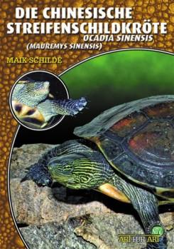 Die Chinesische Streifenschildkröte: Ocadia sinensi