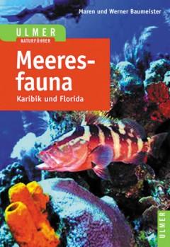 Meeresfauna Karibik und Florid