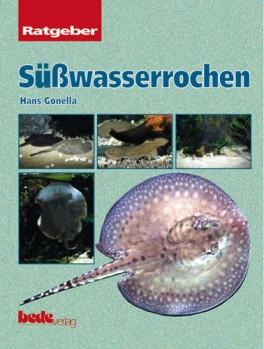 Süßwasserrochen - südamerikanische Süßwasser-Stechrochen