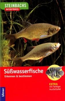 Süßwasserfische Erkennen & Bestimmen