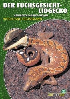 Der Fuchsgesicht-Lidgecko Aeluroscalabotes felinus