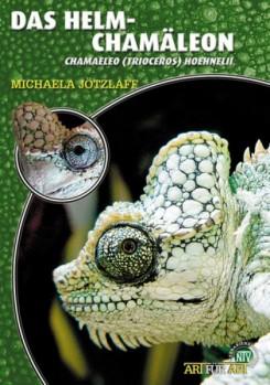 Das Helmchamäleon Chamaeleo (Trioceros) hoehnelii