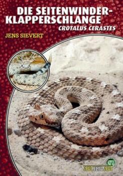 Die Seitenwinder-Klapperschlange Crotalus cerastes