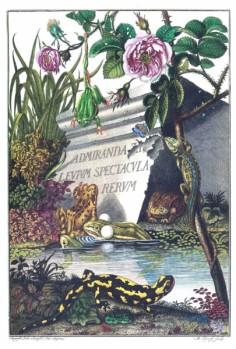 Naturgeschichte der Frösche hiesigen Landes