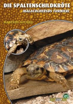 Die Spaltenschildkröte Malacochersus tornieri