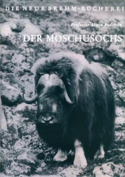 Der Moschusochs (Ovibos moschatus)