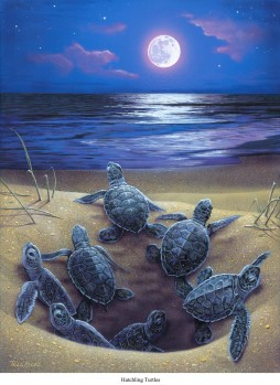 Schlüpfende Meeresschildkröten - Chelonia mydas