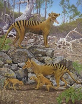 Beutelwolf - Thylacinus cynocephalus