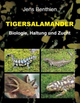 Tigersalamander – Biologie, Haltung und Zucht