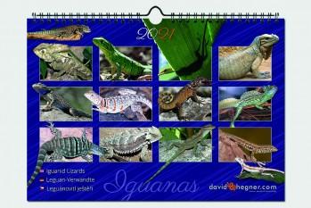 Leguan-Verwandte/Iguanid Lizards 2021