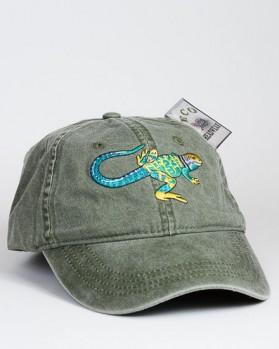 Collared Lizard – Halsbandleguan
