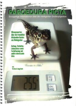 Paroedura picta – Einzigartige Informationen über die intelligenten Großkopfgeckos