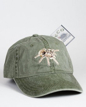 Desert Blond Tarantula – Aphonopelma chalcodes