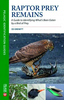Raptor Prey Remains – A Guide to Identifying What's Been Eaten by a Bird of Prey