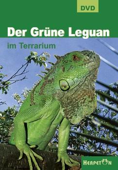 Grüne Leguan