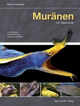 Muränen im Aquarium - Lebensweise, Artbestimmung, Haltung und Pflege