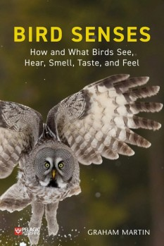 Bird Senses How and What Birds See, Hear, Smell, Taste, and Feel