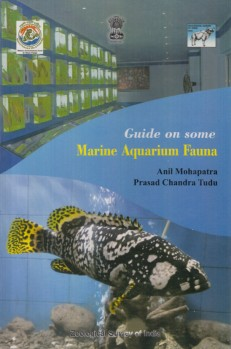 Guide on some Marine Aquarium Fauna