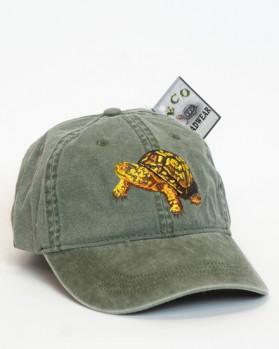 North American Box Turtle – Dosenschildköte
