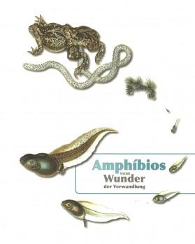 Amphíbios – Vom Wunder der Verwandlung