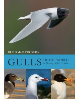 Gulls of the World – A Photographic Guide
