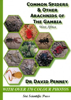 Common Spiders & other Arachnids of the Gambia (West Africa)