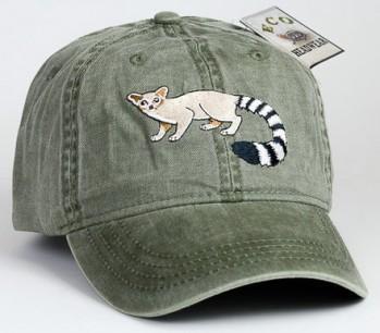 Ring-Tail Cat – Nordamerikanisches Katzenfrett