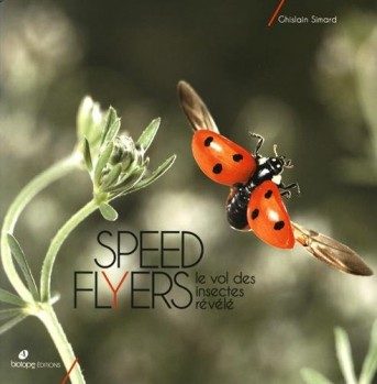 Speed Flyers – le vol des insects révélé