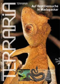 12 Auf Reptiliensuche in Madagaskar