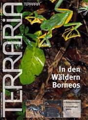 21 In den Wäldern Borneos