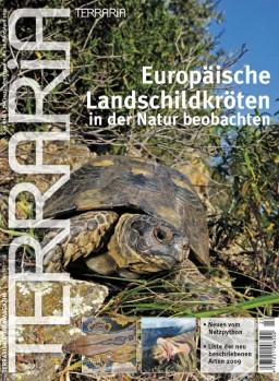 22 Europäische Landschildkröten in der Natur beobachten