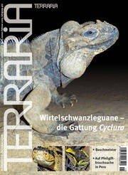 15 Wirtelschanzleguane der Gattung Cyclura