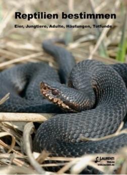 Reptilien bestimmen – Eier, Jungtiere, Adulte, Häutungen, Totfunde