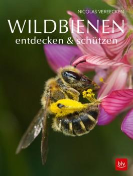 Wildbienen entdecken & schützen – Aktive Bienenhilfe – Lebensräume schützen!