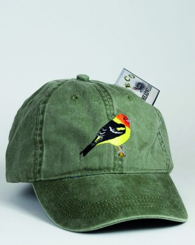 Western Tanager – Kieferntangare