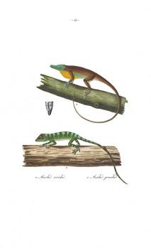 Abbildungen zur Naturgeschichte Brasiliens/Recueil de Planches colorées d'Animaux du Brési