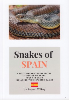 Snakes of Spain – A Photographic Guide to the 16 Species of Snakes found in Spain including their Spanish Names