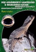 Der gebänderte Samtgecko & Wahlbergs Gecko